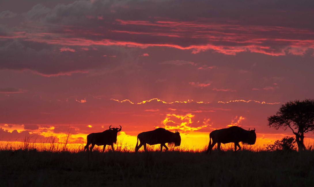 Масай Мара Кения Мы выбрали национальный парк Масай Мара, но, честно говоря, практически любой другой парк Кении, наполненный нетронутой дикой природой, подарит закат не хуже.