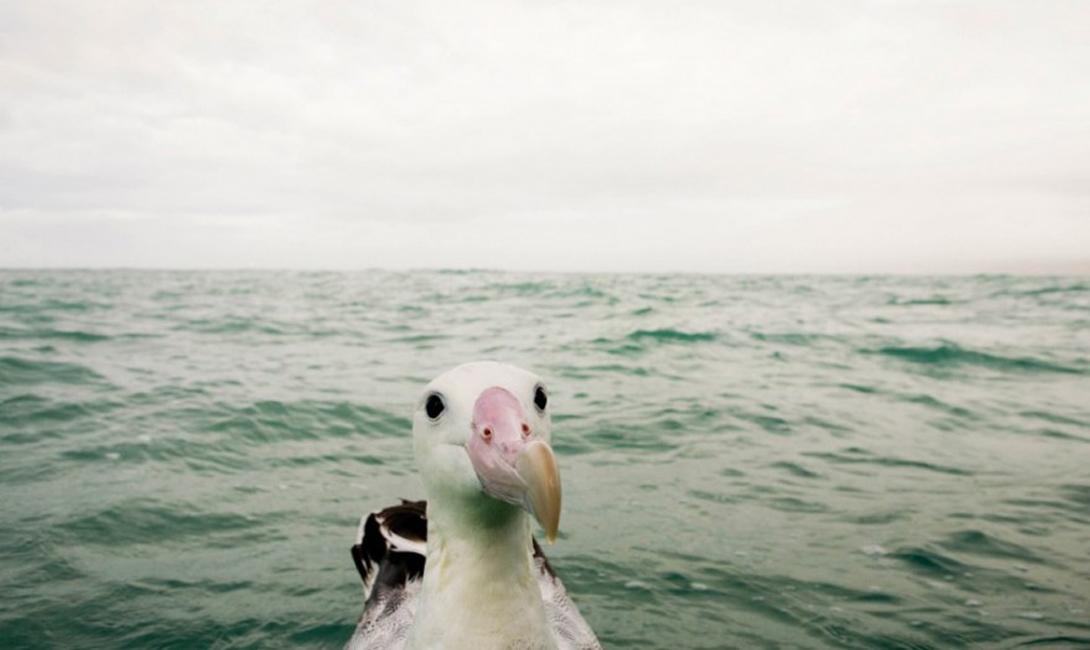 Любопытство Фотограф: Себастиан Кернекнехт