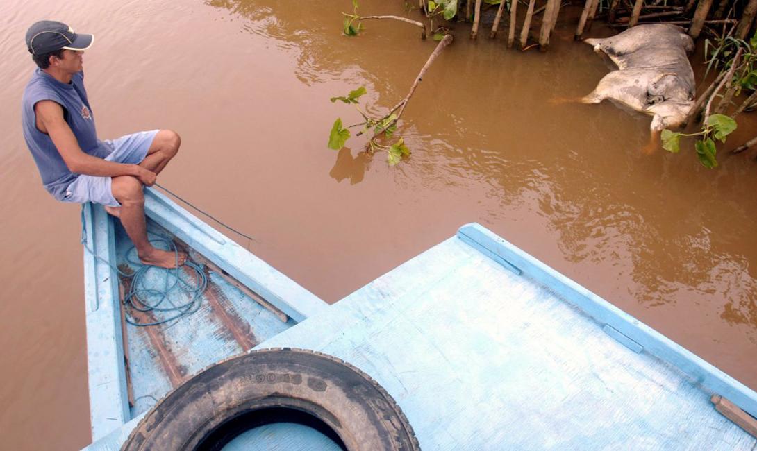 Бразильский рыбак смотрит на мертвого быка у берега реки Параиба. 8 апреля 2003 года 320 миллионов галлонов токсичных отходов вытекло в реку — результат аварии на заводе Минас-Жерайс.
