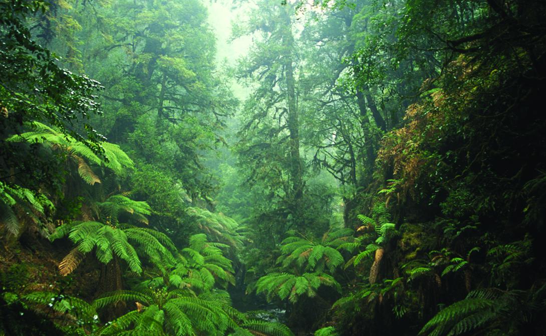 Лес Таркин Австралия Этот изолированный от окружающей природы лес является прекрасным примером того, как выглядела наша планета целых 300 миллионов лет назад. Таркин — второй по величине образчик умеренного тропического леса в мире и дом 3000-летнего великана Хуон Пайнс, второго же из старейших живых деревьев на всей планете. Стоит поторопиться с визитом сюда, поскольку лесозаготовительные компании плевать хотели на историю и уже начинают работы с окраин Национального парка.