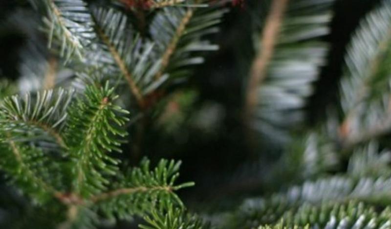 Увлажнитель воздуха Этот полезный в быту прибор поможет продлить жизнь дереву. Оставляйте освежитель воздуха включенным на три-четыре часа в день. В принципе, можно обойтись и обычным пульверизатором — но тогда придется опрыскивать елку вручную и делать это несколько раз в день.