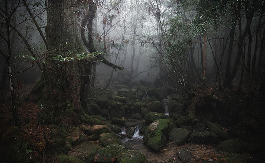 Лес Яку Япония Замшелые камни, увитые корнями японского кедра, лежат здесь уже семь тысяч лет. Прогулка по лесу Яку перенесет вас в прекрасную сказку, которая будет перекликаться с местной мифологией. Позаботьтесь о поездке заранее: чтобы попасть в этот национальный парк, вам придется забронировать путевку на специальном сайте.