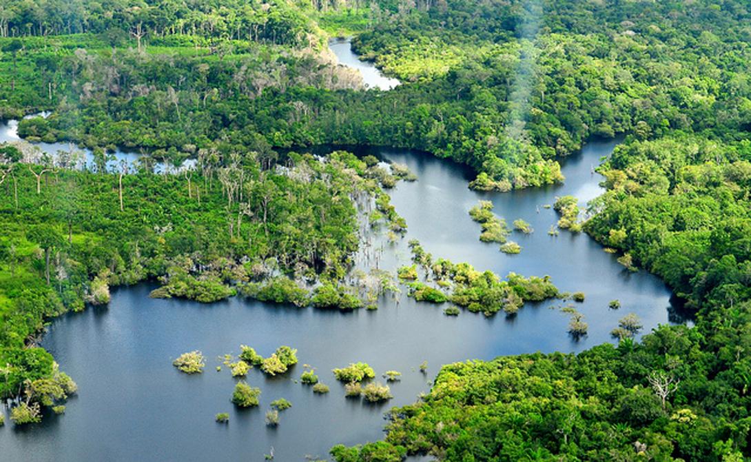 Тропические леса Амазонки Бразилия За 55 миллионов лет местные леса практически не изменились. Человек продолжает вырубать эти заповедные заросли, но даже он, со всей его напористостью пещерного дикаря, ничего не может поделать с величественным презрением природы. Власти Бразилии и Перу устроили здесь Национальный парк, в глубине которого живут племена, еще ни разу не столкнувшиеся с цивилизацией.