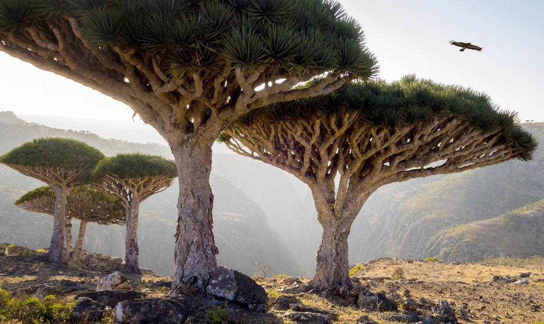 Сокотра Йемен Лес Сокотра выглядит так, будто его забыли здесь инопланетяне. Необычные кроны деревьев и сами напоминают НЛО — туристы же утверждают, что сюда, и в самом деле, приземляются гости из далекого космоса.