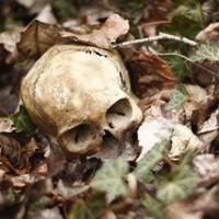Самые страшные смерти, которые подготовила нам природа