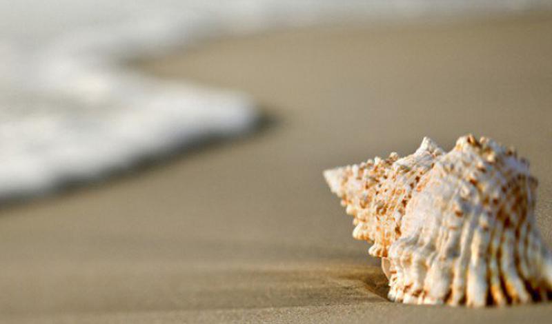 Прогулка с улиткой Пляж усеян ракушками, и вы решаете подобрать самую красивую — ее дымчато-ржавый конус выглядит просто классно. Положите конус в карман и почти сразу начинайте молиться. Вам повезло подобрать морской конус — самую ядовитую улитку на планете. Место укуса выглядит как жало пчелы, ничего страшного. Вот только нога болит все сильнее и, что это, кровь? Начинает болеть голова. Рвота не дает дышать. Яд блокирует центральную нервную систему, что приводит к параличу. Но есть и приятные новости: до смерти у вас еще почти сутки. Сутки, в течение которых сознание будет заперто в парализованном теле. Сутки страха и боли. Вечность одиночества.