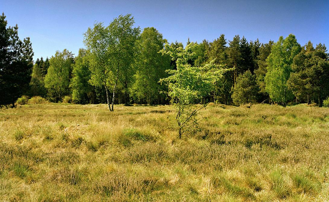 Снайпер укрылся на небольшом холме, вблизи края леса. Правая сторона снимка.