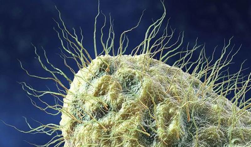 Грибок Места обитания: домашние тапочки Всемирная организация здравоохранения бьет тревогу уже давно: согласно статистическим данным, грибковыми заболеваниями может похвастать каждый пятый житель нашей планеты. Вообще-то, споры грибка есть практически во всех тапочках, заболеть вам мешает только хороший иммунитет. Меняйте обувь раз в два месяца, или стирайте — грибок боится высоких температур.