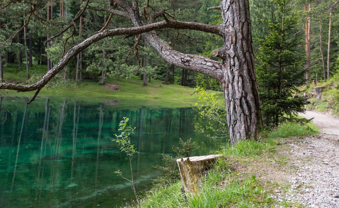 Зато весной здесь все преображается. Вода очень чиста и очень холодна — совсем недавно она была ледяным настом.