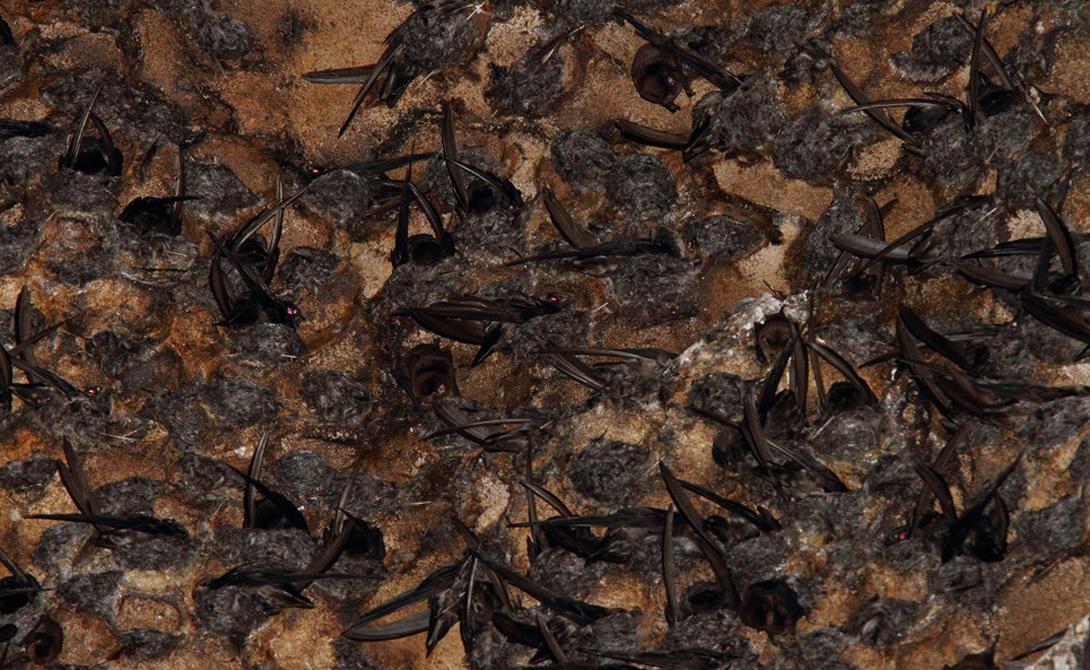 Здесь не место слабонервным. Недосягаемый взгляду потолок укрывают миллионы летучих мышей, а стены и пол покрыты огромными тараканами, жуками, крысами и прочим созданиям, которые способны вызвать припадок паники у самого стойкого путешественника.