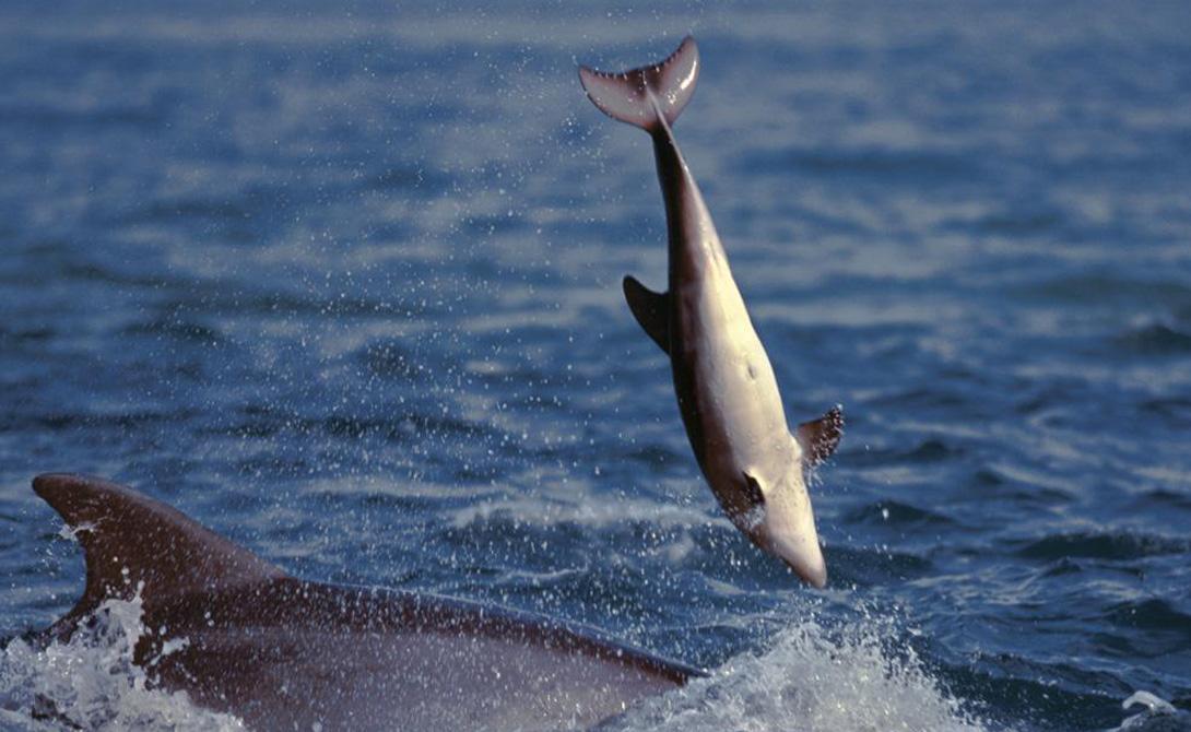 Полученная информация смутила исследователей. Дельфины всегда считались добрейшими созданиями — как выяснилось, у всех есть своя темная сторона.