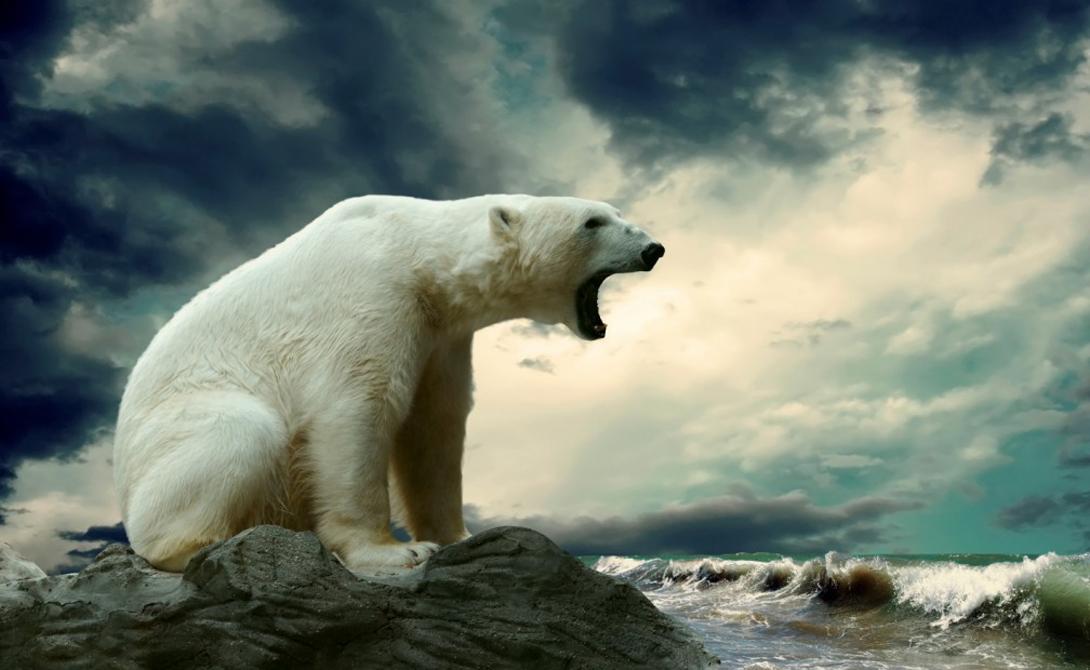 Белых медведей в Антарктиде нет. Отправляйтесь за ними в Арктику, ну или в Канаду.