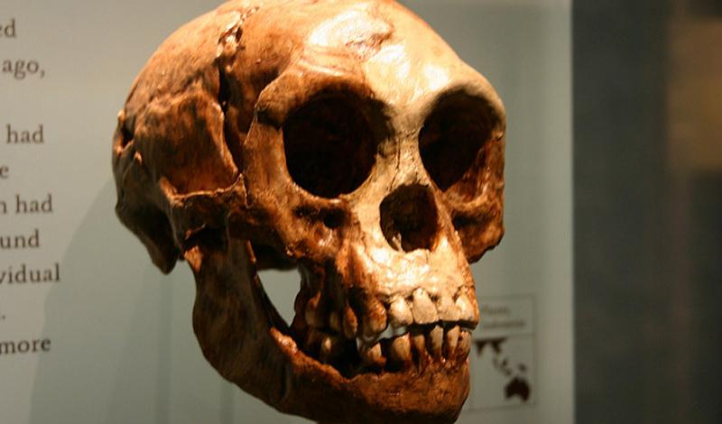 Последняя полученная информация позволила ученым сделать окончательный вывод. Изучив слои в костях сохранившегося черепа и сравнив его с современными людьми, они пришли к выводу, что крошечные хоббиты обладают существенными отличиями.