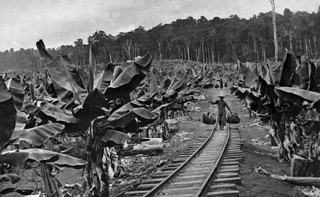 Те же UFC очистили сотни квадратных километров леса, чтобы организовать свои банановые плантации. Это привело к ужасным последствиям: местное население гибло на работах, местная флора и фауна умирала из-за нарушения экосистемы.