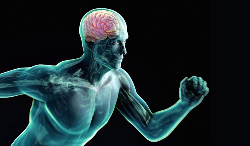 Гений из спортзала Все очень просто: любые предпринимаемые нами движения мозг вынужден контролировать, попутно усваивая что-то новое. Дети, начавшие заниматься до школы, демонстрируют более высокий уровень концентрации, недоступный их оставшимся без подготовки сверстникам. Пожилые люди, уделяющие внимание развивающим мыслительным упражнениям, практически не страдают от снижения когнитивных способностей. В спортзале же тело стимулирует дополнительный приток крови к мозгу, что способствует увеличению количества нейронов. Тренировка высвобождает ряд нейротрансмиттеров и гормоны роста, имеющие решающее значение для здоровья мозга.