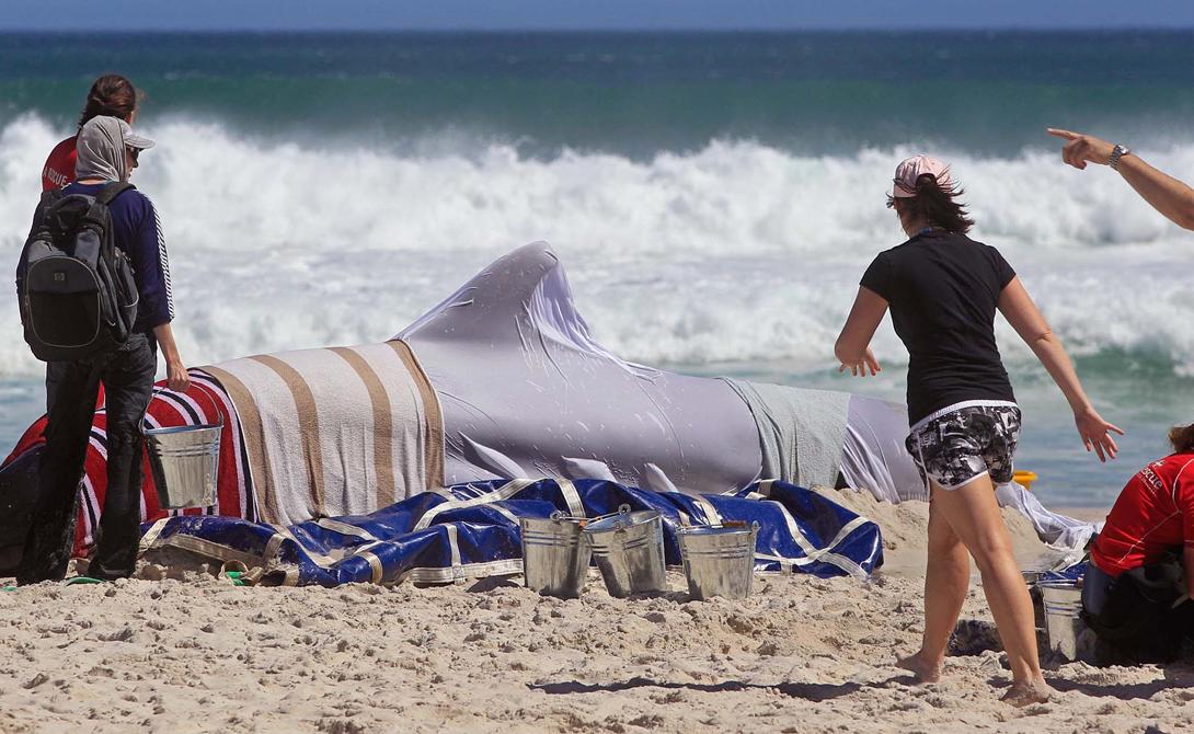 В долгосрочной перспективе, человек ответственен за изменения привычной среды обитания млекопитающих. Снижение запасов пищи, загрязнение воды, изменение температуры — сочетание этих факторов буквально сводит китов с ума.