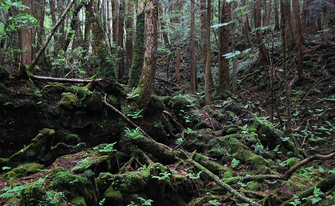 Лес Аокигахара Япония Под мрачные своды этого леса приезжают умирать люди — с 1950 года здесь покончили с жизнью уже несколько тысяч человек. Никто не может объяснить этой ужасной традиции, которая не спешит уходить в прошлое. Муниципалитет ближайшего города установил здесь камеры видеонаблюдения, лес Аокигахара постоянно прочесывают специальные отряды полиции, а люди просто продолжают умирать. На окраинах Леса Самоубийств развешаны объявления с номерами телефонов психологической помощи — но кого это когда останавливало.