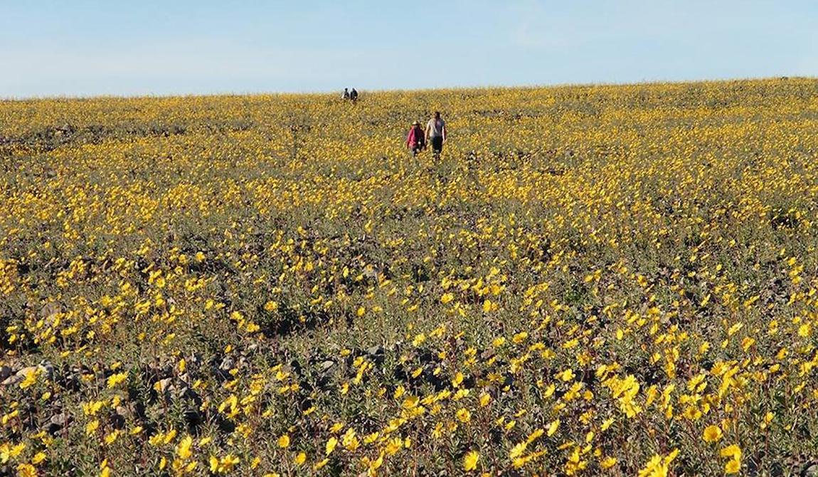 Это удивительное событие, но смотрители Национального парка могут дать ему свое объяснение. Местные растения проводят большую часть времени семенами, покоящимися в этих неплодородных землях.