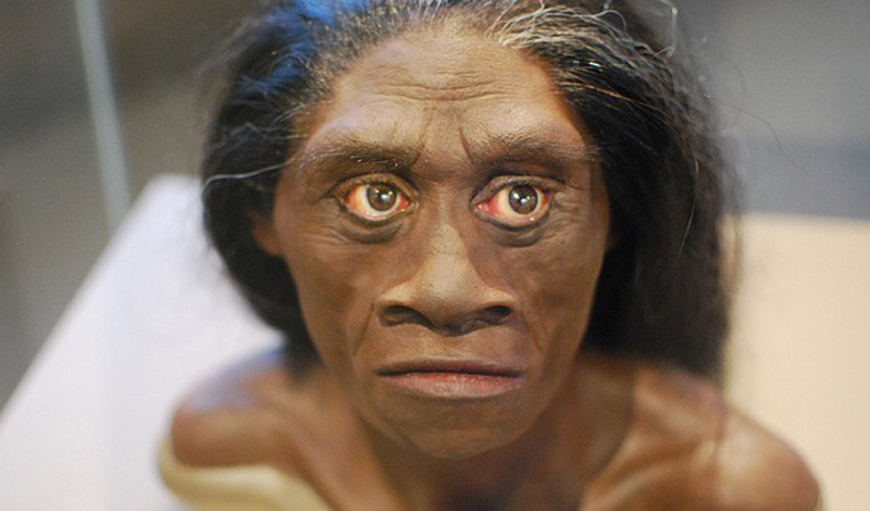 Не обнаружилось никаких признаков того, что флориентийские люди страдали от неизвестного заболевания. Исследователи утверждают: миниатюрные существа не относятся к виду Homo sapiens. Однако существующей информации все еще недостаточно, чтобы понять, стоит ли относить индонезийских «хоббитов» к отдельному виду.