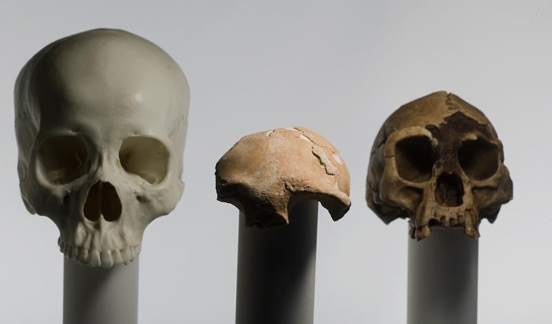 Здесь и были найдены захоронения племени человека флоресского. Эта триба вполне может оказаться недостающим звеном, связывающим человека прямоходящего и его далеких предков.