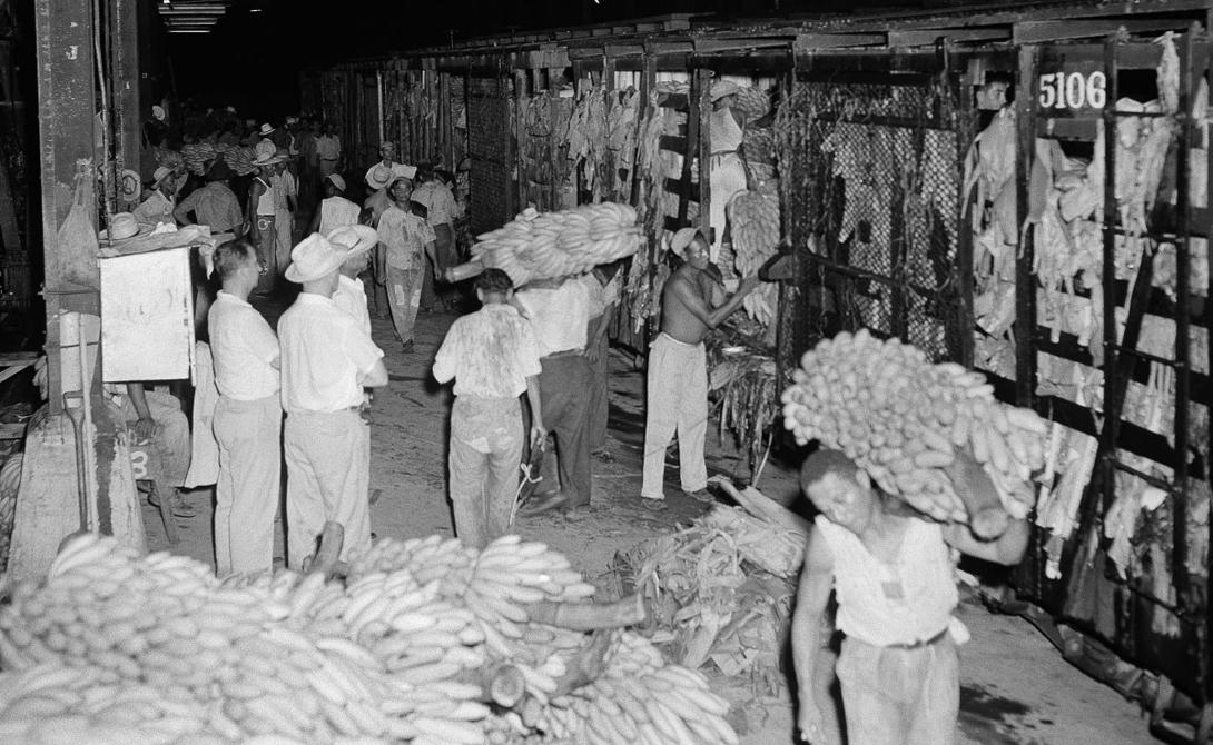 Первая поставка бананов от UFC практически полностью досталась работникам порта — компания еще не умела рассчитывать сроки созревания верно.