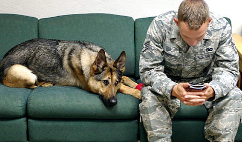 Общительность Похвалите собаку — и она будет счастлива весь день. За ласковые слова и поглаживания, здоровый психически пес способен на любые трюки. То ли дело собака, которой внезапно стала грустно. Ее не привлекают ни любимые игрушки, ни добрые слова.