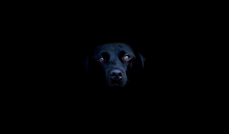 Что может вызвать депрессию В отличие от современного человека, способного впасть в депрессию просто так, собаке требуется серьезный повод. Если вы будете знать, что именно вызвало негативное состояние вашего любимца, то сможете быстро и эффективно изменить сложившуюся ситуацию. Вообще говоря, основная причина собачьего стресса — резкие перемены в жизни. Собаки любят, когда все идет рутинно, так, как было всегда. Вот несколько главных факторов возникновения проблемы: Отсутствие должного внимания Бывший домосед-хозяин начал постоянно ходить на работу Появление нового члена семьи Потеря члена семьи Переезд на другое место жительства Ремонт дома Передача в новую семью