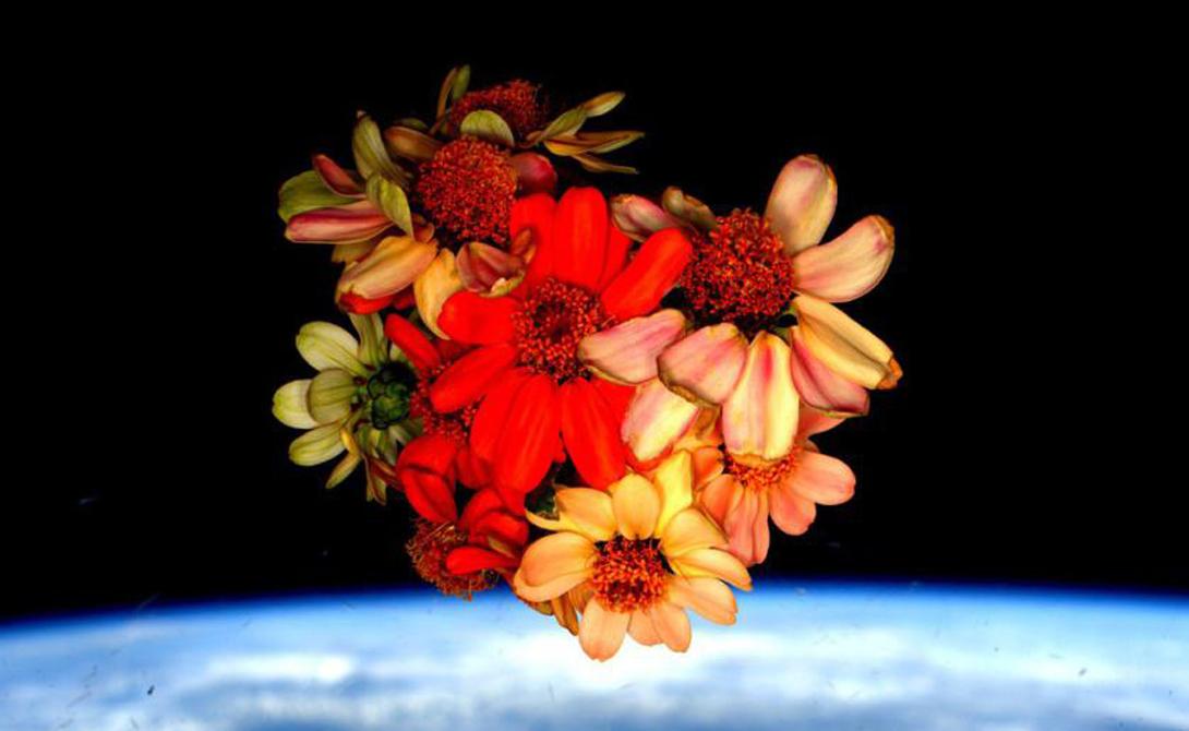 Космические цветы.