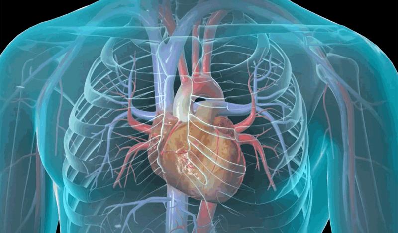 На это стоит обратить внимание в первую очередь Затрудненное дыханиеПовышенная потливость и холодный потОщущение отечности, боль в желудке, или удушьеТошнота или рвотаГоловокружение, сильная слабость или повышенное чувство тревогиБыстрое, нерегулярное сердцебиение