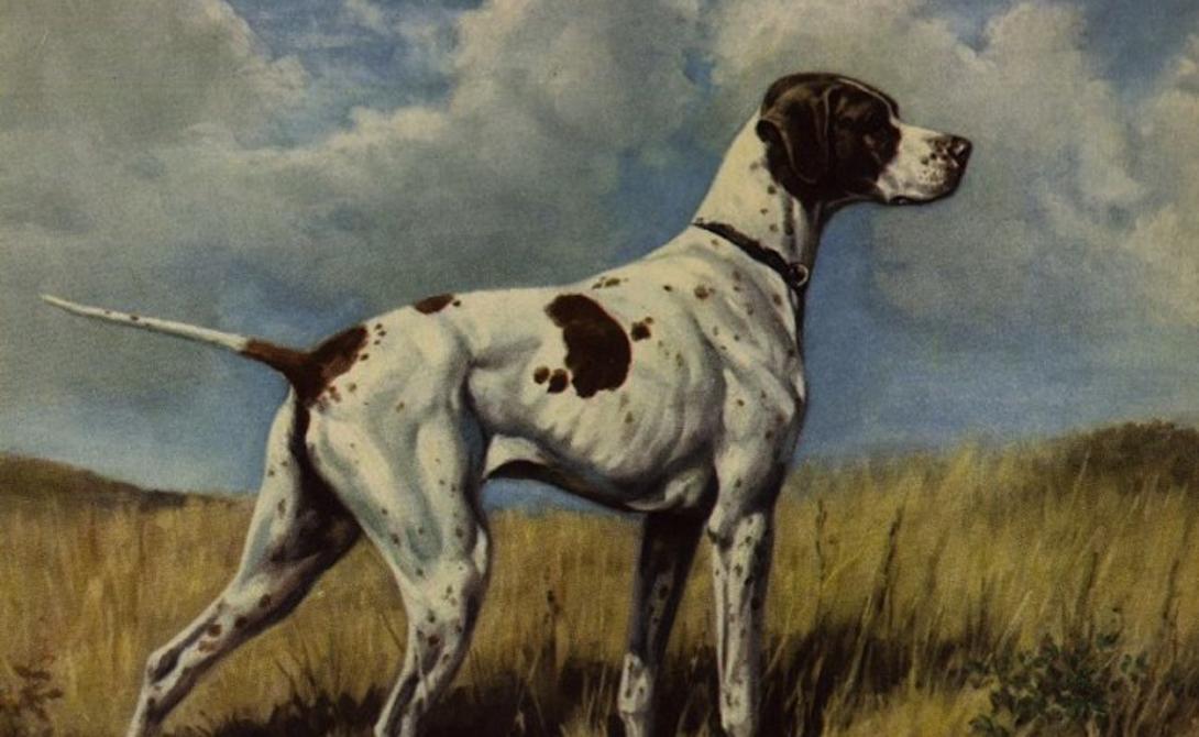 Бракк дю Пюи Охотничьи собаки весьма ценились во все времена. Селекционеры постоянно работали над улучшением существующих пород и пытались создать новые. Бракк дю Пюи стал одним из удачных экспериментов по неоднократному скрещиванию французского бракка с борзыми: гибкая, смелая и быстрая собака, способная в одиночку вытащить самую неудачную охоту.