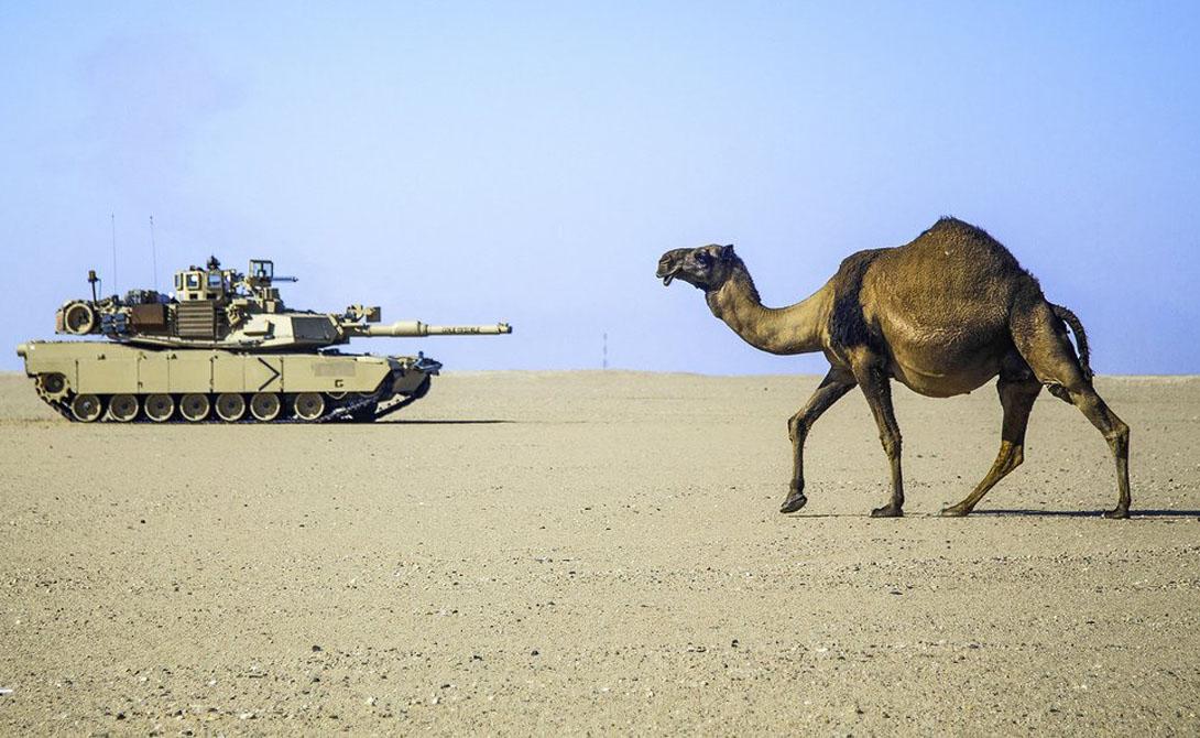 США, а также Ирак, Саудовская Аравия, Египет и Австралия используют M1 Abrams в качестве основного боевого танка.