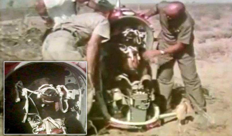 Соединенные Штаты использовали медведей для проверки адекватной работы катапульты в самолетах. Серьезно. Некоторым даже выдавали автоматические парашюты: попробуйте представить себе это зрелище.