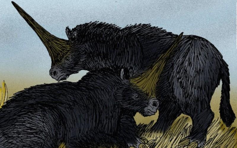 Открытие принадлежит ученым Томского государственного университета. Они сообщают о том, что часть черепа носорога (Elasmotherium sibiricum) – ископаемого животного, жившего в Евразии, была найдена в Казахстане в поселке Кожамжар. Проведя радиоуглеродный анализ, палеонтологи выяснили, что животное жило каких-то 26 тысяч лет назад, то есть застало появление человека разумного. Ранее носорог-эласмотерий считался вымершим еще 350 тысяч лет назад.