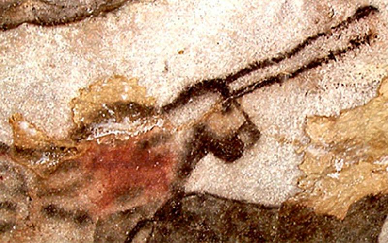 Эта находка позволяет сделать также еще один вывод — раз представители эласмотерия просуществовали вплоть до верхнего палеолита, древние люди могли успеть увидеть их воочию. Следовательно, изображенные на наскальных рисунках единороги не были просто плодом разыгравшейся фантазии наших далеких предков.