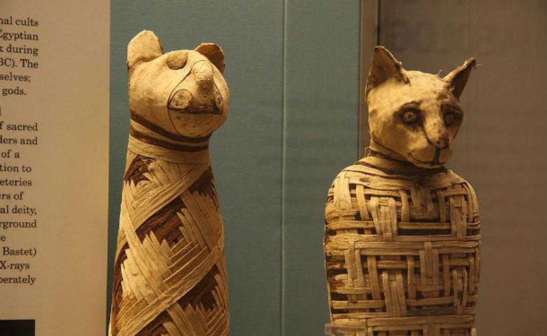 Египтяне подвергали мумификации не только людей. Шакалы, кошки, обезьяны, лошади, птицы, змеи, крокодилы, бегемоты и даже львы. Можно сказать, что эти парни были несколько одержимы мумификацией.
