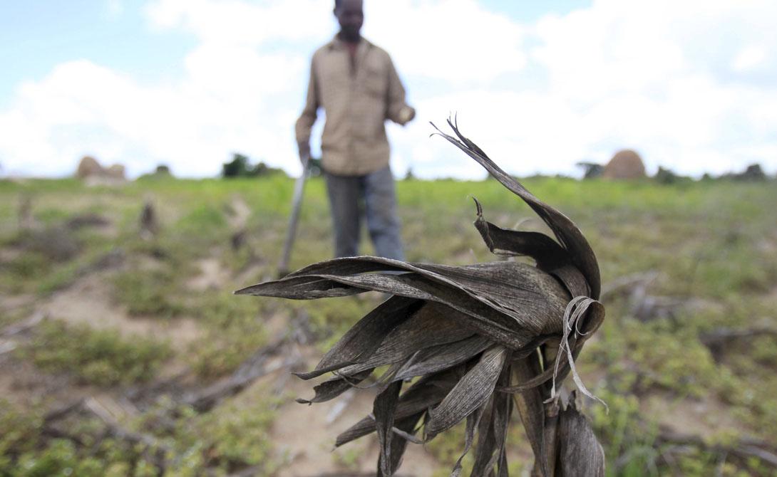 Гвинея-Бисау Продолжительность жизни: 46.76 года 5 врачей на 100 000 человек в стране; 9% населения заражено малярией, в то время как темпы распространения холеры тоже находятся на подъеме. Материнская и младенческая смертность очень распространена, кроме того, здесь до сих пор культивируется варварский обычай усечения женских половых органов.