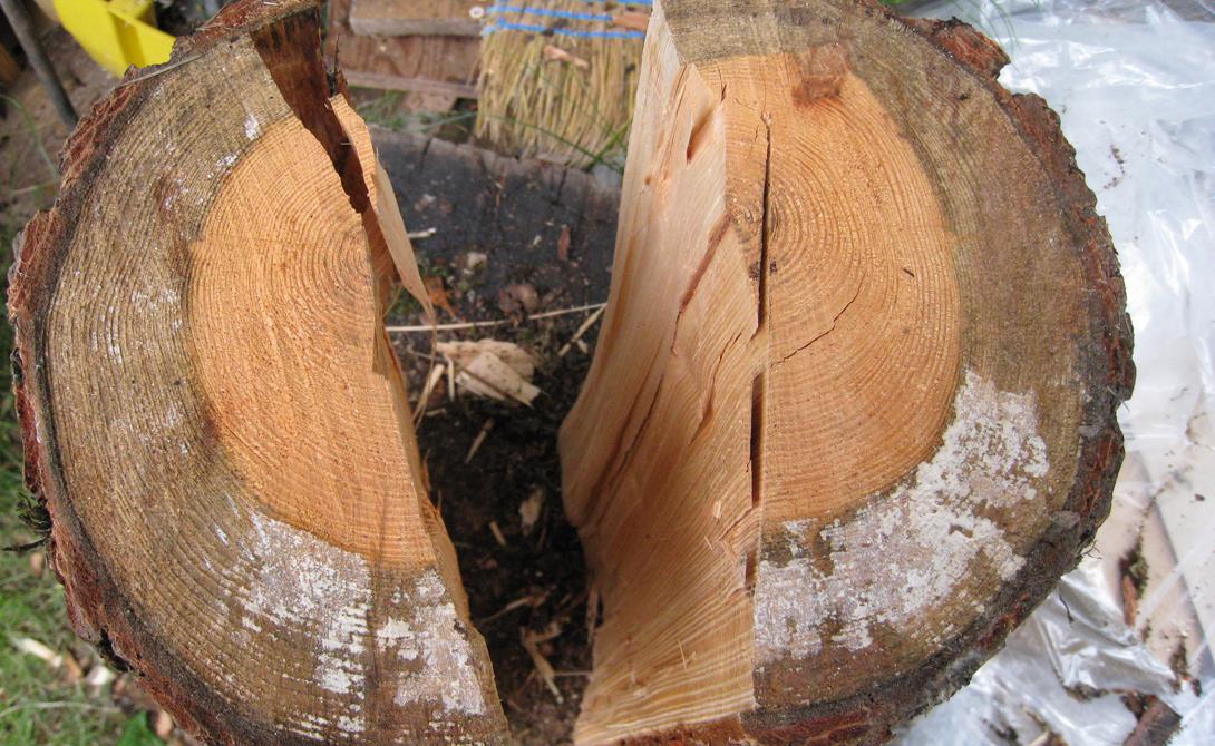 Подготовка бревен Длина идеальных дров для печи и камина не превышает 40-50 сантиметров. К тому же, короткие поленья легче будет колоть. Перед началом колки распилите длинные поленья. Следите за тем, чтобы края оставались ровными — вам ведь придется ставить дрова на срез.