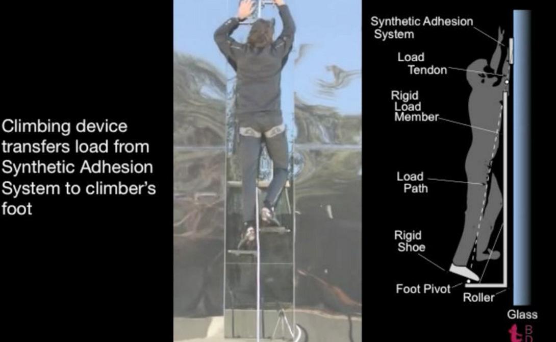 Присоски на руках В рамках проекта Z-Man американские военные ученые уже разработали специальные перчатки, с помощью которых солдат сможет забраться на любую стену. Существующий прототип способен выдерживать нагрузку до 80 килограмм.