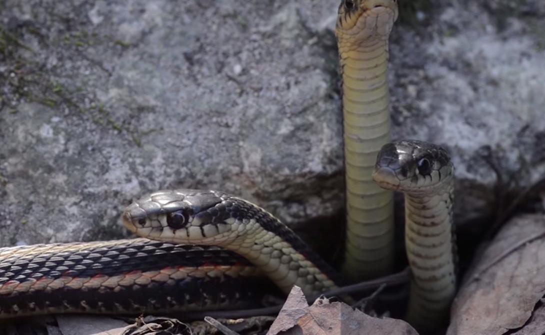 И только в сентябре змеи возвращаются в свои логова. Жители окрестностей облегченно вздыхают: до следующего змееапокалипсиса остается еще целых 8 месяцев.