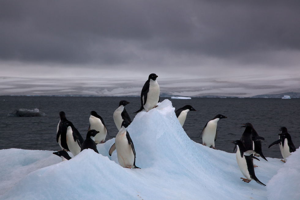 Антарктида Любой список самых пустынных мест планеты должен включать Антарктиду. Огромный континент, где люди пытаются, но никак не могут закрепиться. Некоторые районы материка настолько мертвы, что лишены даже бактерий. Другие же вполне обитаемы — пингвины, к примеру, с удовольствием проводят время, развлекаясь на бескрайних просторах Антарктиды.