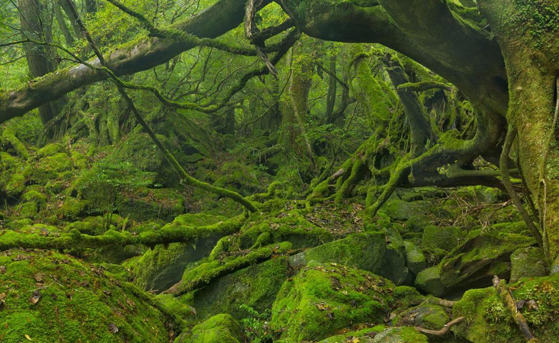 Остров Якусима Япония Остров является объектом Всемирного наследия ЮНЕСКО, а вот туристы открыли его всего пару лет назад. Расположенный у берегов Кюсю небольшой клочок земли покрыт тысячелетним лесом. Побывать здесь — все равно, что совершить путешествие на машине времени.