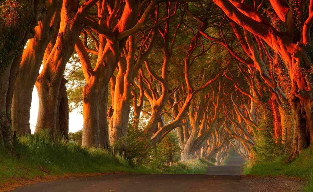 Дарк Хеджес Северная Ирландия А этот лес будто сошел со страниц фантастического романа. Dark Hedges, украшающий дороги Северной Ирландии, смахивает на тоннель, ведущий прямиком в сказку. Фанаты Джорджа Мартина несомненно признают эту местность — именно здесь пробегала малышка Арья Старк в начале второго сезона.
