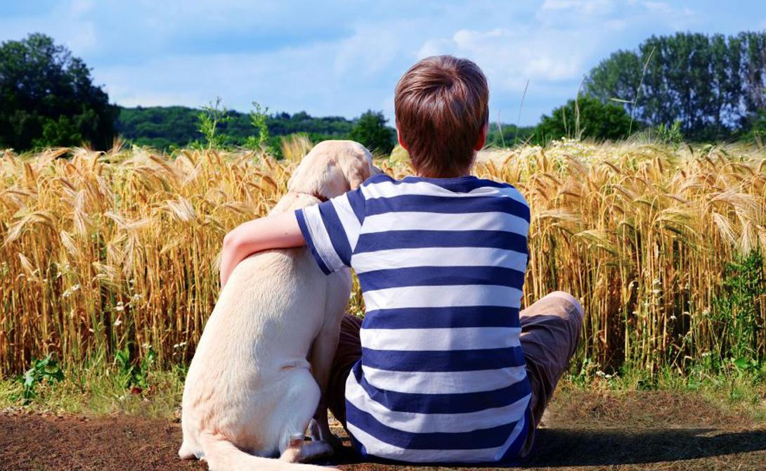 Перекармливание Толстой может быть не только ваша бывшая. Распространенная проблема большинства собачников — избыточное питание. Постарайтесь держать себя в руках и не закармливать любимого пса с утра до ночи. Следите за тем, чтобы поощрительные угощения составляли не более 5% от дневной нормы потребления калорий. Помните: некоторые человеческие продукты для собак просто токсичны.