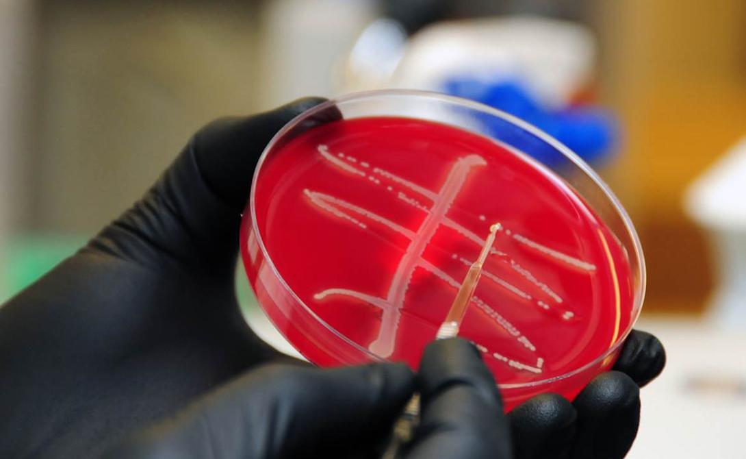Антибиотиком «последнего шанса» на данный момент остается колистин. Он активно действует на все современные бактерии, вызывая целый ряд неприятных для человека побочных эффектов.