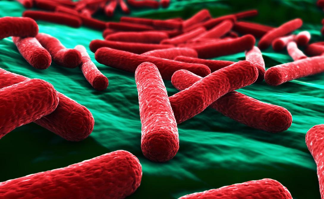 У нас есть всего два способа предотвратить вымирание вида. Во-первых, потребуется поставить употребление антибиотиков под серьезнейший контроль, чтобы не дать почву развития очередным супермикробам. Во-вторых, на поиск новых антибиотиков необходимо будет затратить гигантские суммы денег, что воспринимается многими странами как неприемлемый путь. Кроме того, врачам потребуется аналитический материал. Проще говоря, новые лекарства будут найдены после того, как супермикробы соберут свою мрачную жатву в крупных и развитых городах.