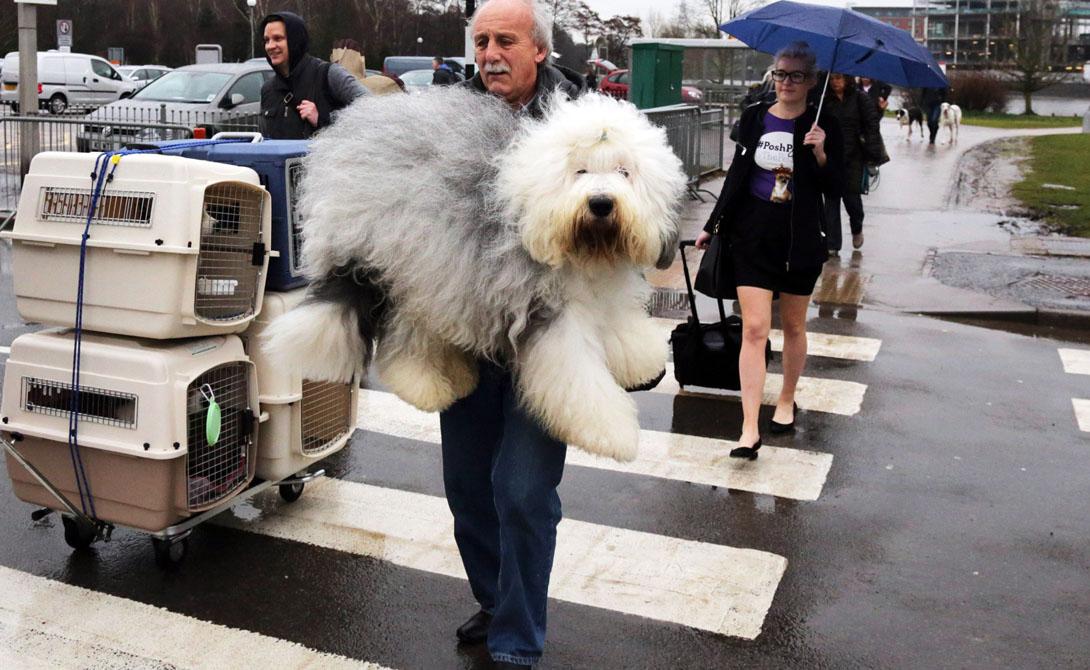 Физическая нагрузка Недостаток физической нагрузки губителен для собаки. Большинству животных достаточно ежедневных прогулок — если хозяин ленив, то пес вполне может заработать проблемы и со здоровьем, и с психикой. Оценить состояние любимца способен каждый: постоянная гиперактивность говорит об избытке нерастраченной энергии, лишний вес о недостатке тренировок.