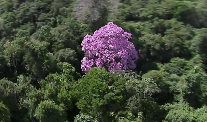 Люк Пиллоа и Гилем Нэрал Двое 34-летних французов в 2007 году семь недель выживали в самой глуши Гвианы, питаясь лягушками, многоножками, черепахами и пауками-птицеедами. Первые три недели друзья, заблудившиеся в лесу, провели на месте, соорудив убежище – они надеялись, что их найдут, но потом поняли, что плотные кроны деревьев не позволят их заметить с воздуха. Тогда парни отправились в путь в поисках ближайшего жилья. Под конец путешествия, когда, по их расчетам, оставалось идти не более двух дней, Гилему стало совсем плохо, и Люк пошел один, чтобы как можно быстрее привести помощь. Действительно, вскоре он вышел к цивилизации и вместе со спасателями вернулся к напарнику – для обоих приключение закончилось благополучно.