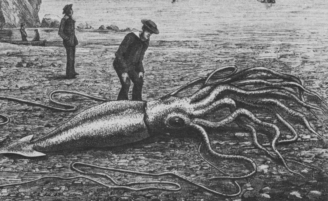 С момента открытия этого вида, люди гадали о его максимальных размерах. Наши последние исследования показали действительно пугающие результаты: под водой живут настоящие монстры. — доктор Крис Пэкстон, Университет Сент-Эндрюс