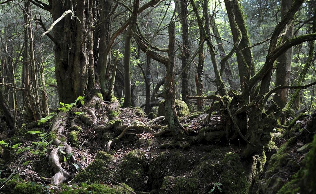 Пазлвуд Глостершир, Англия Даже небо, даже сам властелин колец признают, что Пазлвуд — один из самых волшебных лесов планеты. Этот густой, мрачный лес полон замшелых корней и корявых старых деревьев, со скрипучими мостками через бурные речушки.