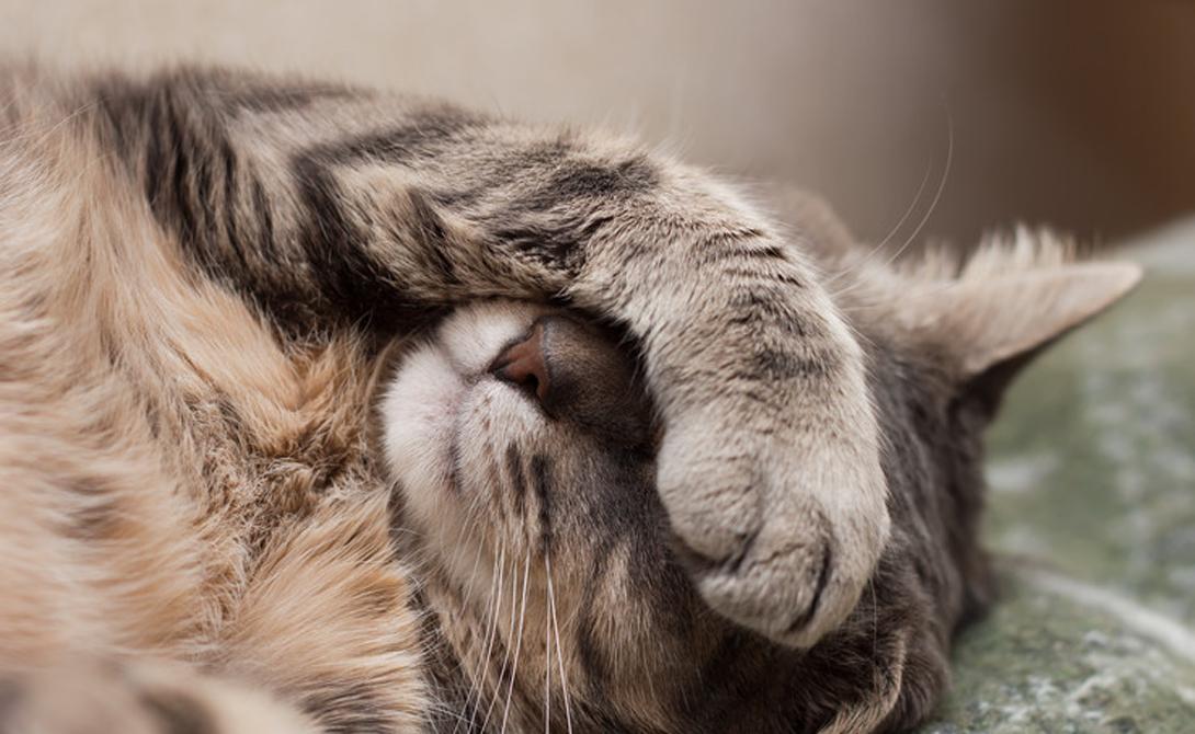 Toxoplasma gondii Toxoplasma gondii — удивительный простейший паразит, которому необходимо менять хозяев в процессе размножения. Излишняя склонность к риску, который вызывает токсоплазмоз — лишь средство подтолкнуть вас к необходимым паразиту действиям. Крысы, промежуточные хозяева, становятся более смелыми и не боятся кошек. А кошки являются конечным хозяином паразита: съеденная крыса означает успех операции.